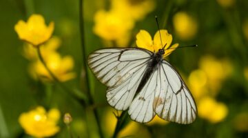 March 2018 Why Recycling Really Does Benefit the Environment Butterfly